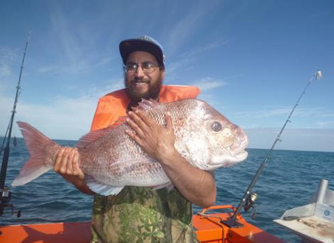 A big Bay of Plenty Snapper